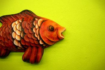 pesce fuor d'acqua2